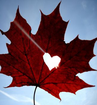 Maple Leaf with Heart